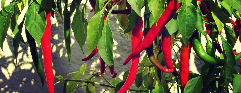 cayenne peppers scoville heat units