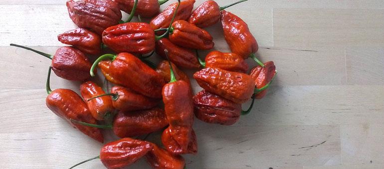7-pot-madballz-pepper