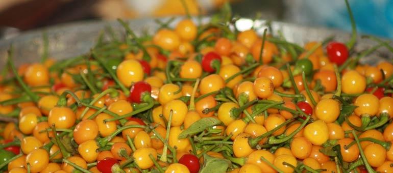 Guyana Wiri Wiri Pepper